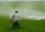 Fact sheet: Tax on pesticides